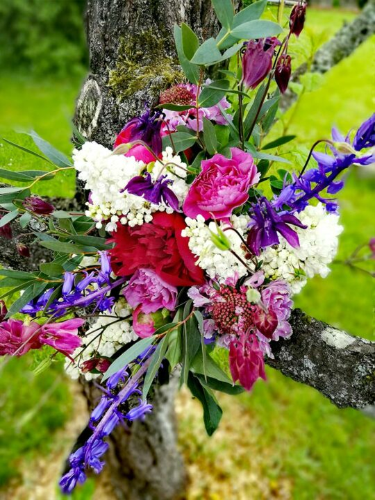 abonnement-floral-fougeres